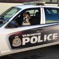 Szívszorító: egy kutya bakancslistája képekben
