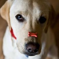 Így hazudnak a kutyák