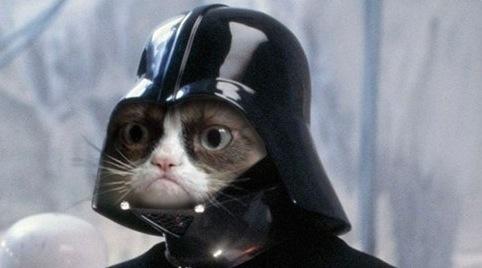 cat_dark.jpg
