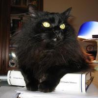 A plázaoroszlán is cica, csak egy kicsit jósol is