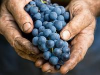 Kis pincészeteket népszerűsít a Wineliner.com