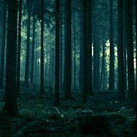 Nem látja az erdőtől a fát?