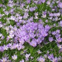 virágok közt veled lenni... - virágterápiák