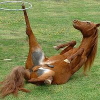 természetgyógyászat - a ló másik oldala