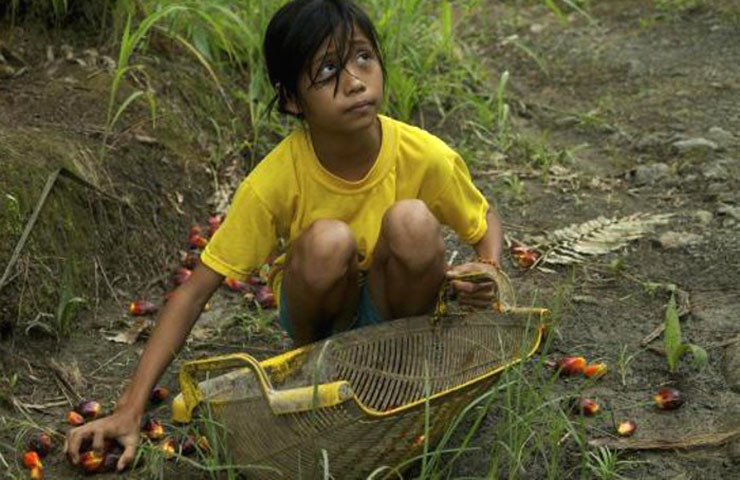 palm-oil-child-labor.jpg