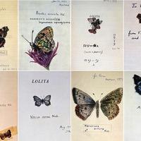 Szivardoboz rejtette Nabokov pillangóit