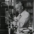 A Nobel-díjas kém: Hitler személyesen adott ki elfogatóparancsot Szent-Györgyi Albert ellen