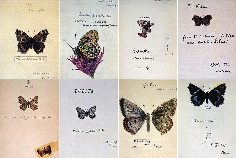 nabokov-butterflies.png