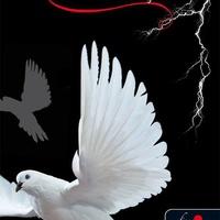 Spirit Bliss: Mennydörgő némaság