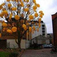 esernyőfa