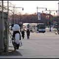 magányos panda a városban