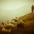 Mi a jó vezető feladata és mi nem?