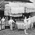 Tésztagyárak a huszadik században