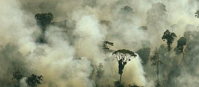 erdőégetés1.jpg