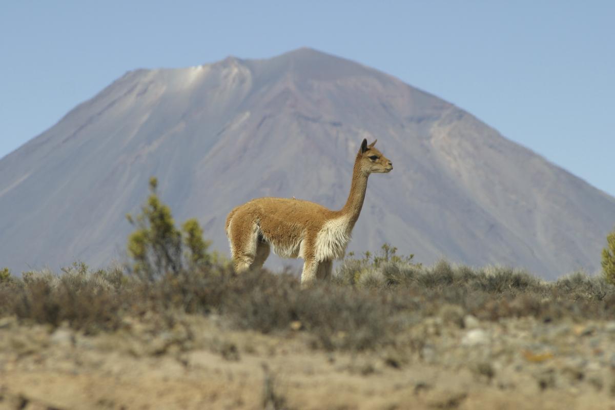 Egy 500 napos motortura 750 - A Sivatag Porat Egy Helyi Etkezdeben Pihentuk Ki Mielott Felszalltunk A Perui Alvo Buszra