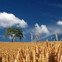 Az agrárium és az élelmiszeripar versenyképességéről