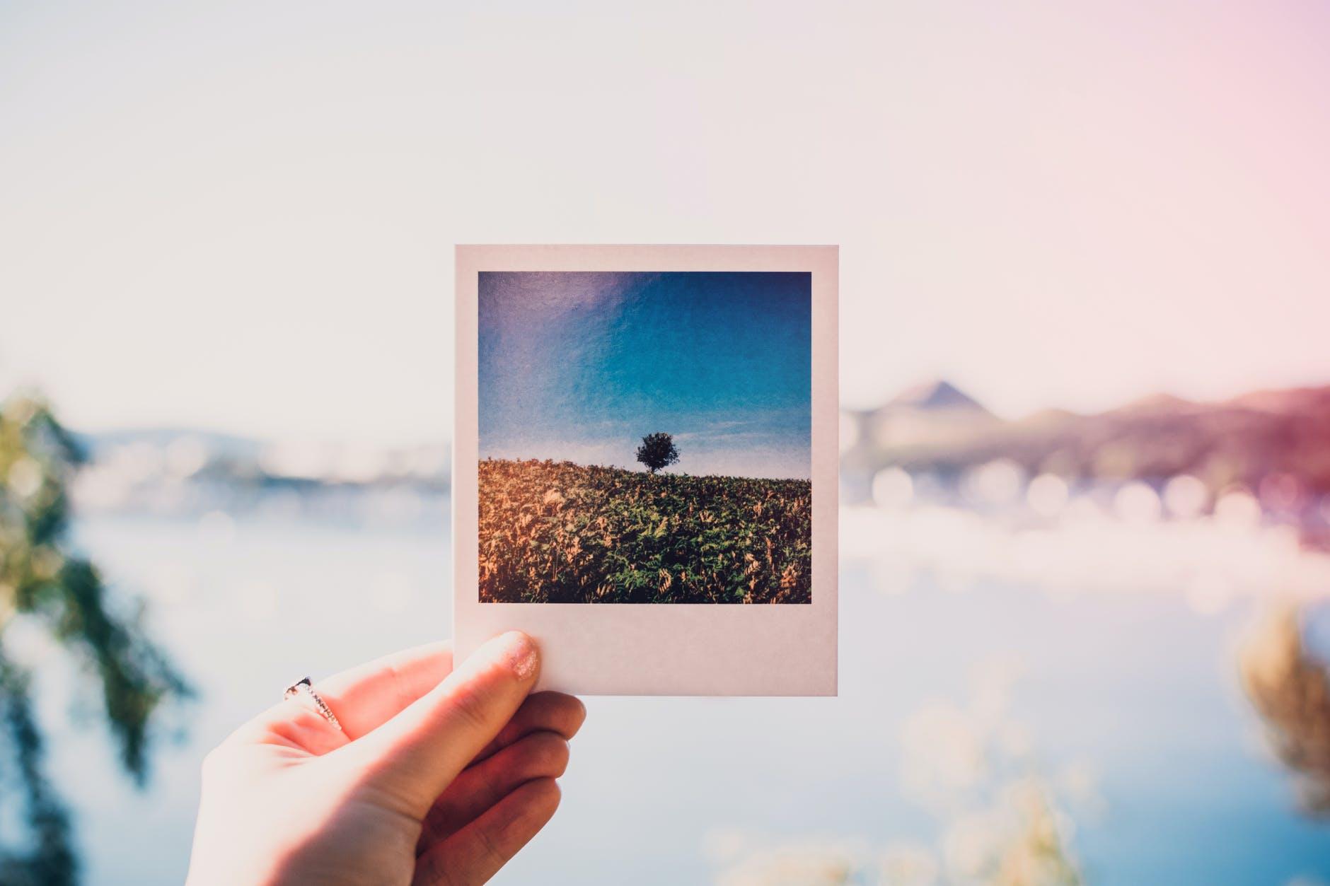 pexels-photo-1252983.jpeg