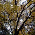 Ősz - Fall