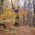 Ősz a Bükkben (Fall)