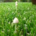 Gombák megint...