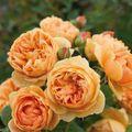 Színek - a februári kertálmom izzó narancs volt