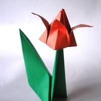 Tulipános szép napot!