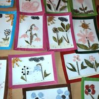 Képek fűszernövényekből