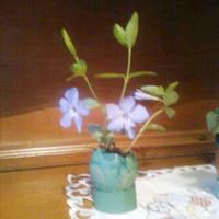Virág tojáshéj cserépben