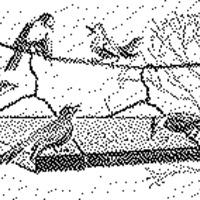 Gondoskodjunk a madarakról!
