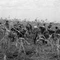 462. Maghordók és kukoricaszedők a Sallér-birtokon