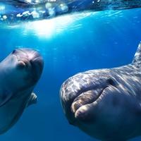 Érdekes, izgalmas, esetenként meghökkentő tények delfinekről