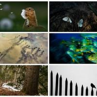 Az év természetfotói - Magyarország 2017 pályázat díjazottai és alkotásai