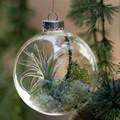 Napi karácsonyi tipp 44. Minikert a fenyőfán
