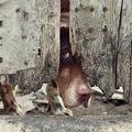 Tabu az állatvédelemben