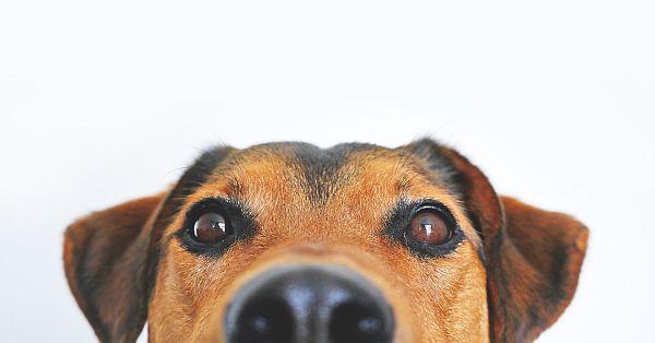 dog-838281_1920_small.jpg