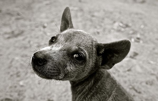 dog-puppy-small-dog-young-dog-39825_small.jpg