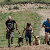 Kutyatartási kultúra, az vajon mi?