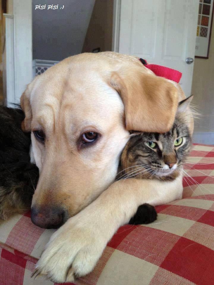 cats-lab-cute-friends.jpg