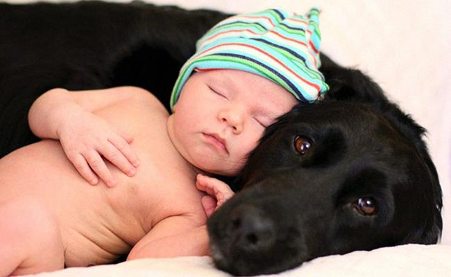 children-dog-labrador-cute.jpg