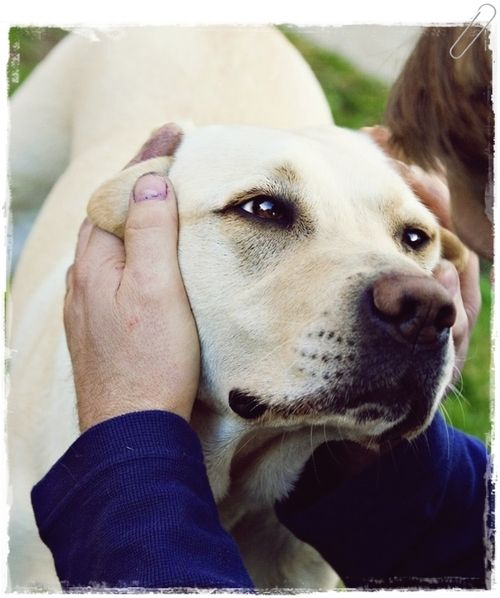 cute-dog-face-emotion.jpg