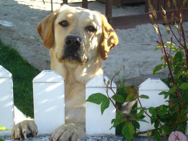 cute-dog-waiting-for-you.jpg