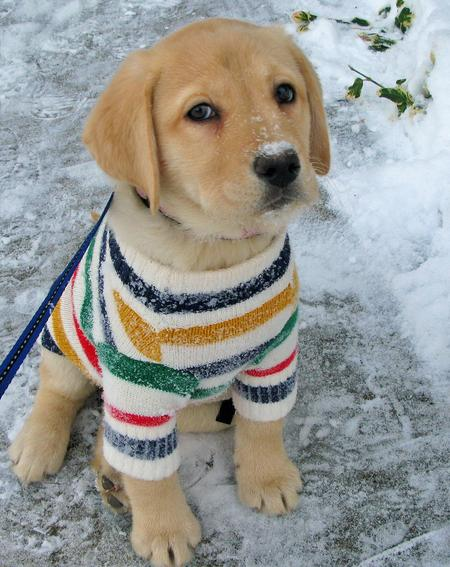 cute-puppy-winter-pics-outfit.jpg
