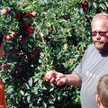 Almát szedjen a szabolcsi autista