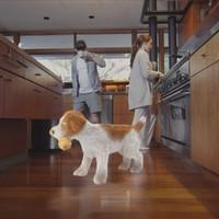 Virtuális háziállatot is tarthatsz