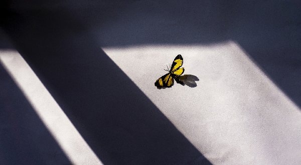 butterfly-5344157_1920.jpg