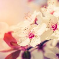 Imádom a tavaszt!