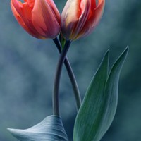 Nőnapra virág, mekkora sovén dög vagyok én?