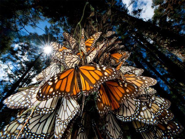 butterfly-tree.jpg