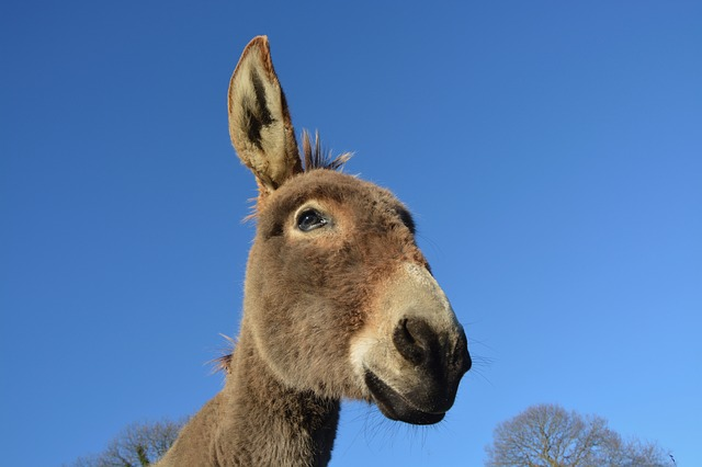 donkey-2658830_640.jpg