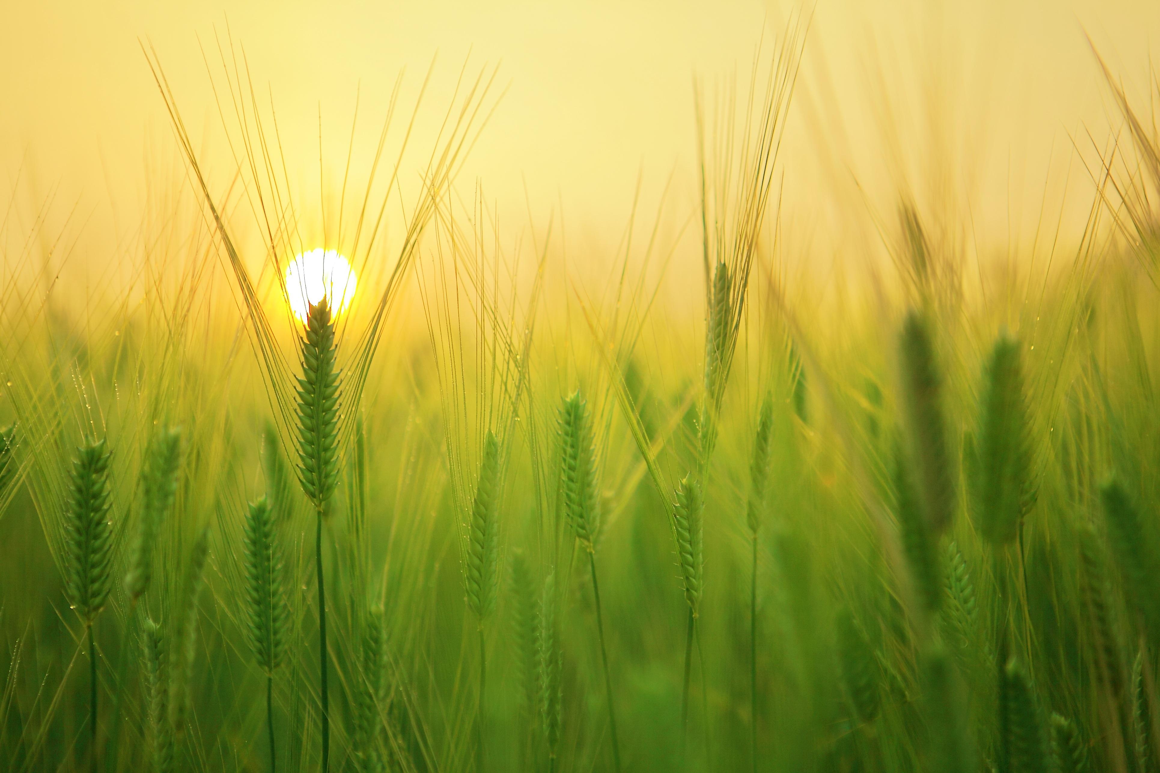 field_sun.jpeg
